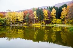 Boyana lake, Vitosha mountain (Simeon Donov) Tags:                 vitoshoa sofia landscape bulgaria bulgarian nature autumn fall leaves forest photography mountain park  boyana water lake   reflections