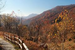 Leaving Cumberland Gap - HFF! (RPahre) Tags: fence hff autumn fall mountains trail virginia tennessee cumberlandgap