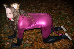 Pink Kitty (Shiny Pet) Tags: spandex catsuit pink cat ears tail costume petplay catplay submissive catboy cathirl lycra cuffs bondage ball gag ballgag gagged kneeling crouching allfours all fours ass butt