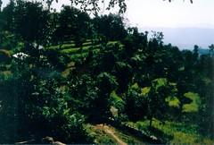 198910.060.nepal.sarangkot (sunmaya1) Tags: nepal sarangkot
