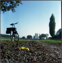 Herbstausflug (Ulla M.) Tags: yashicamat124g mittelformat canoscan8800f 6x6 herbst analog autumn laub blätter dof gegenlicht fahrrad bike leaf tlr tetenalcolortec fujireala umphotoart