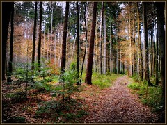 Durch den Wald (almresi1) Tags: wald wood weg welzheim breitenfürst tannen
