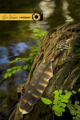 Solitario (noevargasfotografo) Tags: producto comercial outdoors bisutería artesanía plumas