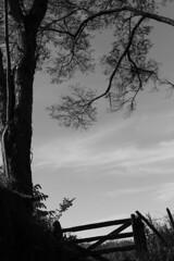 Alto do Canta Galo (Th. C. Photo) Tags: alto cantagalo itajub mg minasgerais pretoebranco blackandwhite pb bw street streetphotography streetphoto photography fotografia rua estrada interior