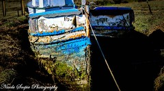 Stories of a Lifetime (ScopiePhotography) Tags: boat washed moss dry beached tied rope paint peel story old