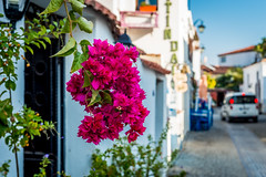 Street of small aegean town (yuliakupeli) Tags: aegean architecture attraction blue bougainvillea buildings cityscape europe flowers green narrow nobody old outdoor plant shrubs sky small sunny town traditional travels village vine walls washed white