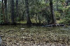 Nacimiento Rio Mundo JAL0021 (dedaimiel) Tags: riomundo naturaleza paisaje landscape nature jalriomundo
