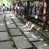 Doi Tung (s i a m) Tags: mountain range wat temple bouddhisme doi tung daen lao video