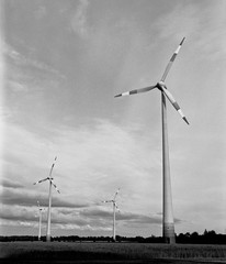 Flock of Windmills (Mamiya RB67 Pro S, Rollei Superpan 200) (baumbaTz) Tags: blackandwhite bw cloud mamiya film windmill monochrome field clouds rollei analog germany deutschland evening abend blackwhite atl may feld wolke wolken windmills s ishootfilm professional mai 49 200 pros epson sw analogue monochrom grayscale schwarzweiss analogphotography stade windturbine windpower windenergy 2200 greyscale windkraft windkraftanlage windturbines windmhle niedersachsen lowersaxony rb67 filmphotography mamiyarb67pros jobo windenergie fpp v500 windmhlen superpan adox filmisnotdead autolab 2013 windkraftanlagen analoguephotography kutenholz filmforever mamiyarb67professionals atomal epsonv500 rolleisuperpan200 windturbinen adoxatomal49 filmphotographyproject atl2200 joboautolabatl2200 20130524