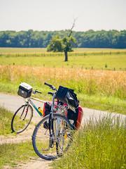 cycling break (miemo) Tags: travel summer france tree field bike trekking trek cycling europe break bikes sunny olympus bicycles telephoto bags loirevalley omd panniers indreetloire em5 panasonic100300mm