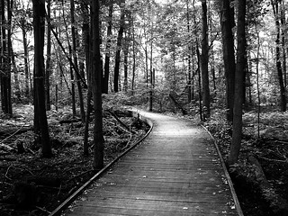 The wooden path (Explored!)