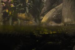 Crocodiles (Charley Aime) Tags: true blood nikon louisiana crocodiles d3200