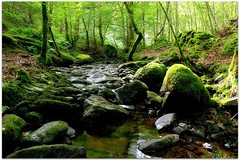 Birnam Glen (eric robb niven) Tags: walking landscape scotland dundee glen dunkeld birnam ericrobbniven pentaxk50