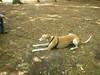 GreyhoundPlanetDay2008020