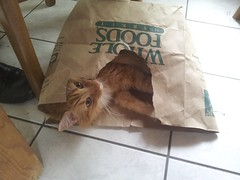 bailey loves paper bags