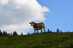 DSC_1855 (Angelo Nori) Tags: italy verde nature landscape nikon italia estate natura trentino valgardena drawingwithlight d7100 disegnareconlaluce nikonclubit nikond7100 angelonori