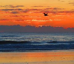 october fire-sky with bonus pelican | anastasia island, florida (amy32080) Tags: ocean sunset sea sky beach pelicans sunrise florida