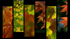 """H/E/R/B/S/T"" (Petra U.) Tags: autumn red orange green leaves yellow collage herbst autumncolors badenbaden herbstlaub herbstfarben flickrchallengewinner"
