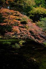 水面と紅葉