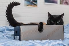 I am watching you! (Sina Farhat) Tags: light home cat canon göteborg bed raw sweden bokeh flash watching stare sverige shoebox hemma katt intryck 031 ljus gothenborg säng 50d blixt skärpedjup canon50mm14usm stirra skolåda fotosondag tittande thephotographyblog fs131110