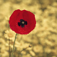 remembrance (Black Cat Photos) Tags: blackcatphotos