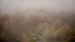 (:-)-(  )~~ (Jos I Z B) Tags: invierno niebla helado frio ocre