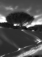 Dunas de Bolonia * TARIFA (xuvira) Tags: cadiz tarifa dunas dunasdebolonia playadebolonia xuvira