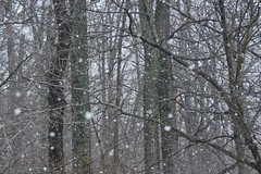 First Snowfall (riknran-can) Tags: snow lowcontrast infocus highquality