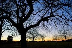 Un crpuscule  la campagne (Pierre Gaz) Tags: winter france tree countryside nikon country explore 28 jargeau explored pierregaz