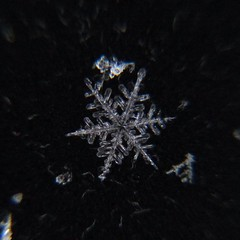 Snowflake (point and shoot camera) ((Jessica)) Tags: snowflake winter snow chicago macro snowflakes flake littlebigshot macroattachmentlens