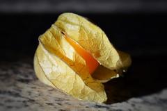Vitamin (hartp) Tags: orange macro yellow fruit deutschland gelb frucht nahaufnahme physalis obst vitamin vitamine straubing hartp andenbeere