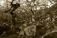 Light & Shadow (D/\ZZ/\) Tags: trees winter light sky sepia contrast moss rocks chaos shadows branches hill 7d trunk maze gorge scattered padley