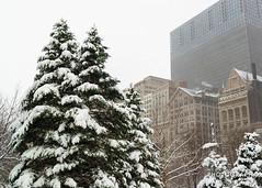 (1.5.14)-Winter in Millennium Park-24 (ChiPhotoGuy) Tags: city winter snow chicago snowstorm millenniumpark chimera winterwonderland explorechicago chitecture enjoyillinois mychicagopix