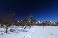 Winter hiking in Nikko National Park (satoson) Tags: winter snow nature japan trekking snowshoe  snowshoeing nikko    tochigi  winterhiking   nikkonationalpark      canon5dmarkii canon senjogaharamoorbog