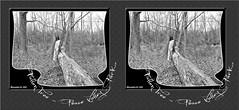 FallenTreeCross-eye3D (DarkOnus) Tags: park tree manipulated lumix stereogram 3d crosseye woods pennsylvania fallen stump stereography buckscounty peacevalleypark crossview dmcfz35