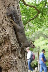Squirrel in Golden Gate Park