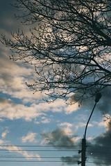 tree (lelyasmi) Tags: