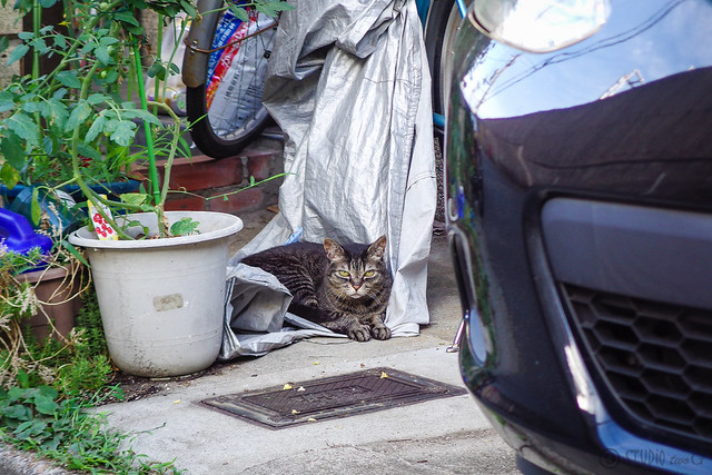 Today's Cat@2014-07-09