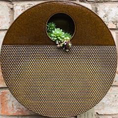 De La Torre ceramics (DankSpangle) Tags: cactus garden ceramic squaredcircle