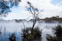 Rotorua Hot Springs-19
