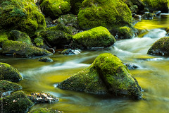The Bird River (deanfosterphotography) Tags: australia kellybasin longexposurewater tasmania landscape moss travel river creek
