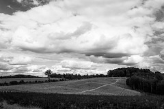 Wolken im Bergischen Land (Meine Sicht) Tags: 24mm baum bergischgladbach bergischesland blackandwhite bw fotokunst herbst leica leicam messsucher rauen rotfilter sw vollformat monochrom schwarzweiss wolken wwwrauenfotode elmarit2824mmasph clouds