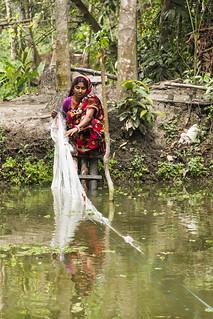 A woman harvesting mola with gill net in Bangladesh. Photo by AWM Anisuzzaman/WorldFish.