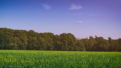 Nationaal Park De Hoge (Christian Passi - Steher82) Tags: landschaft landscape nederland nationaalparkdehoge nature vintage sonya6000 festbrennweite sky clouds netherland travel tress fall herbst 2016 flickr