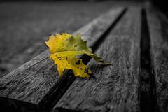 Welcome back Autumn (Artur Tomaz Photography) Tags: leaf yellow autumn bench wood moimenta da beira portugal outuno folha automne outono fall