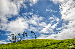 Blissful Skies of Ooty (smohanr2012) Tags: ooty beatifulcoonoor coonoor ootylandscapes india bliss green sky wallpaper blue tea garden landscapes travel mohanrajphotography