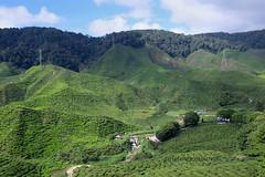 Tea plantation (zolsimpression) Tags: tea malaysia pahang plantation cameronhighlands teaplantation zolmuhd zolsimpression