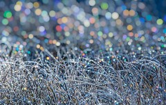 Icy dewdrops at sunrise (Marc Crumpler (Ilikethenight)) Tags: landscape california laketahoe marccrumpler sunrise cold morning bokeh grass field dew canon canon6d 6d tamron150600mmf563 ice icy freezing