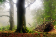 Misty woods (jamietaylor2127) Tags: woods forest mist fog nature landscape sigma camp trees autumn