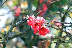 Soria_0833 (Joanbrebo) Tags: canoneos70d efs18135mmf3556is eosd autofocus alamedadecervantes spain soria castillaylen espaa park parque parc garden jard jardn blumen blossom flors flores flowers fiori fleur